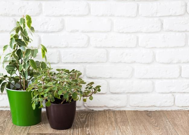 Zimmerpflanzen auf holztisch Premium Fotos
