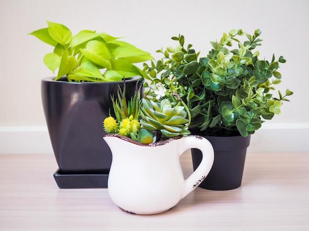 Zimmerpflanzendekorinnenraum zu hause. innenbaum in eingemachtem, um gesetzt auf einen bretterboden zu verzieren Premium Fotos