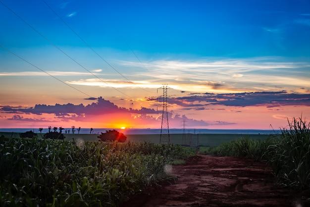 Zuckerrohrfeld mit elektrischer leitung übertragung Premium Fotos