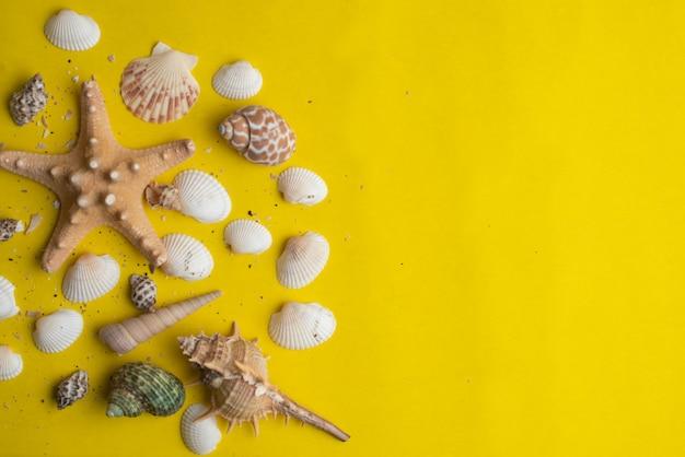 Zusammensetzung von exotischen muscheln auf einem gelben hintergrund. sommer-konzept. ansicht von oben Premium Fotos