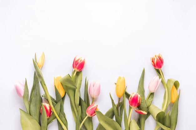 Zusammensetzung von frischen hellen tulpen mit grünen blättern Kostenlose Fotos