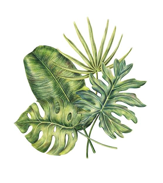 Zusammensetzung von vier exotischen tropischen palmblättern Premium Fotos