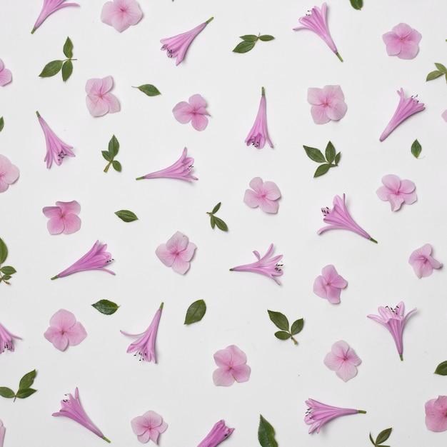 Zusammensetzung von wundervollen violetten blumen und von grünem laub Kostenlose Fotos