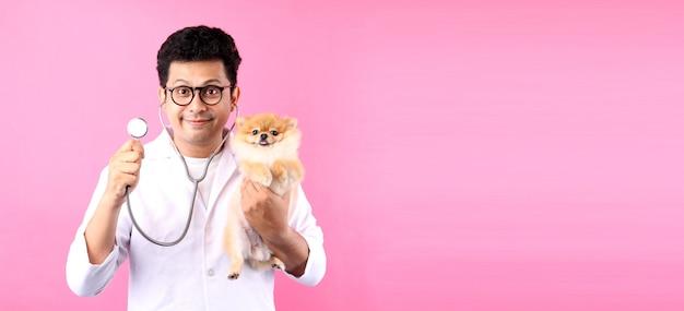 Zuversichtlich männer tierarzt untersuchen westpommern hund auf einem rosa hintergrund im studio Premium Fotos