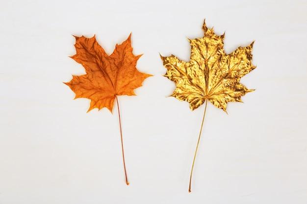 Zwei ahornblätter, eines natürlich gelb oder orange, das andere goldfarben auf hellem betonhintergrund. herbstkonzept. Premium Fotos