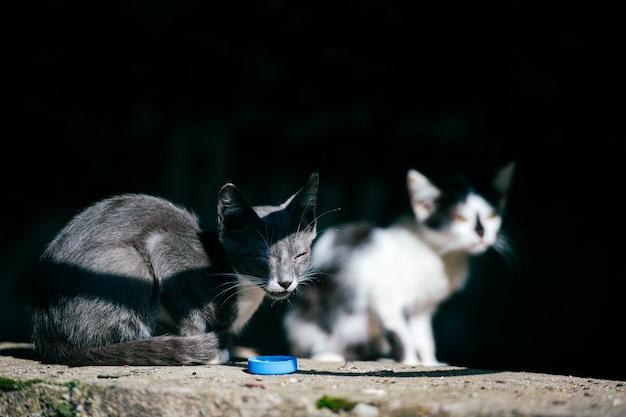 Zwei arme obdachlose landstreicher kranke städtische unglückliche kleine katzen, die zusammen im sommertag unter brücke sitzen und sich umsehen. haustiere im freien. ungesunde straßenkätzchen leben. hungrige tiere Premium Fotos