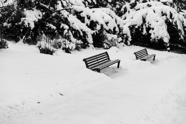 Zwei bänke im winterpark Kostenlose Fotos