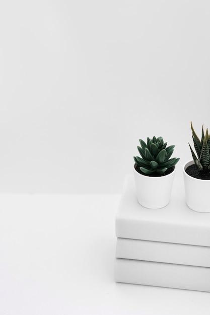 Zwei eingemachte kaktuspflanze über dem staplung der bücher getrennt auf weißem hintergrund Kostenlose Fotos