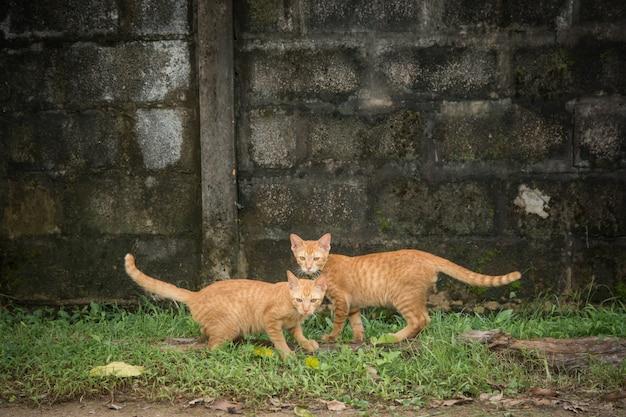 Zwei freundliche katzen, die kamera betrachten Premium Fotos