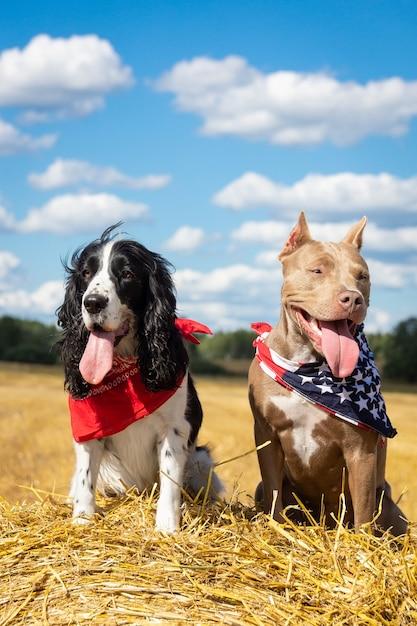 Zwei hunde im heuhaufen Premium Fotos