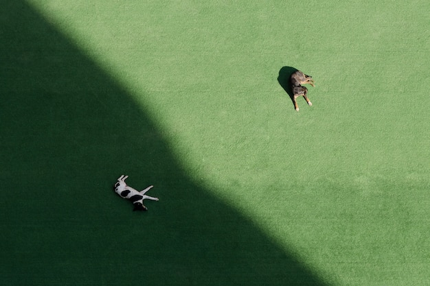Zwei hunde schlafen auf einer grünen wiese, einer im schatten, einer in der sonne. draufsicht, luftbild Premium Fotos