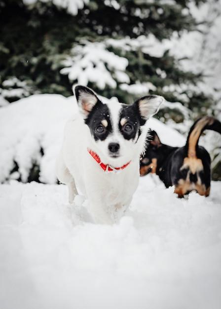 Zwei hunde spielen Kostenlose Fotos