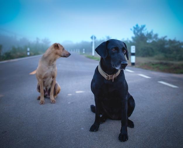 Zwei hunde unterwegs Premium Fotos