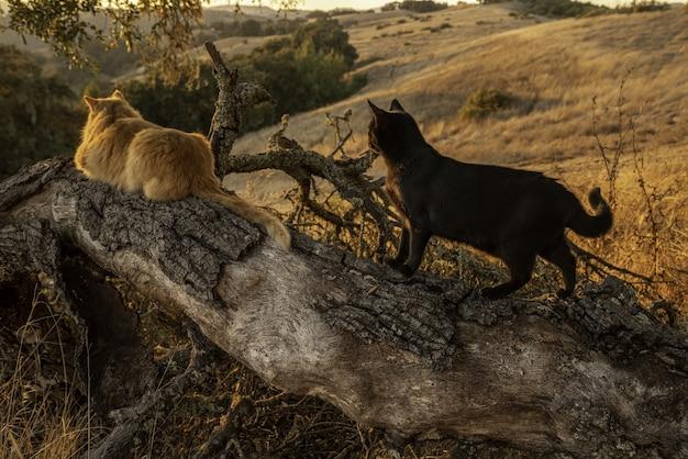 Zwei katzen auf einem baumstamm Kostenlose Fotos