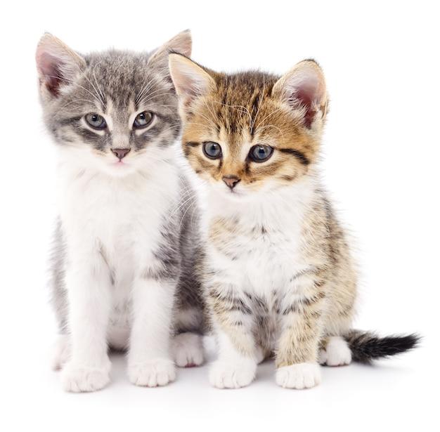 Zwei kleine kätzchen isoliert Premium Fotos