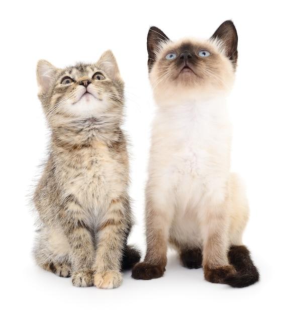 Zwei kleine kätzchen Premium Fotos