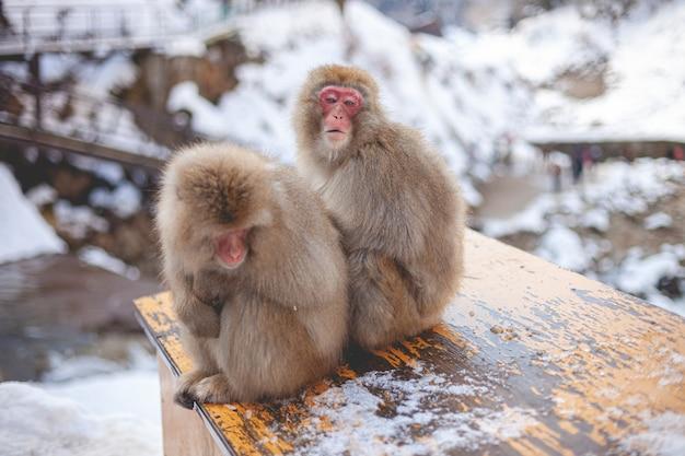 Zwei makakenaffen sitzen nahe beieinander Kostenlose Fotos
