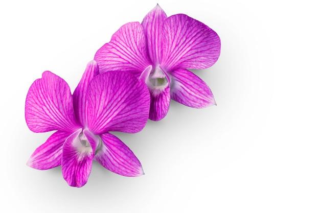Zwei orchideenblumen platziert auf einen weißen hintergrund mit beschneidungspfad und lassen raum. Premium Fotos