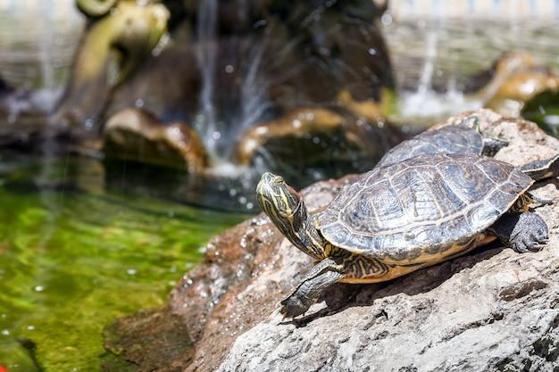 Zwei schildkröten auf den felsen, von der sonne beleuchtet Kostenlose Fotos