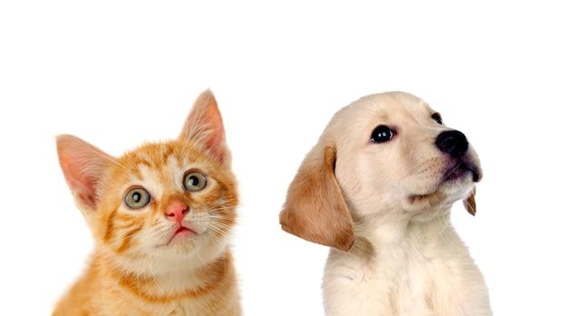 Zwei schöne welpen, eine katze und ein hund, Premium Fotos