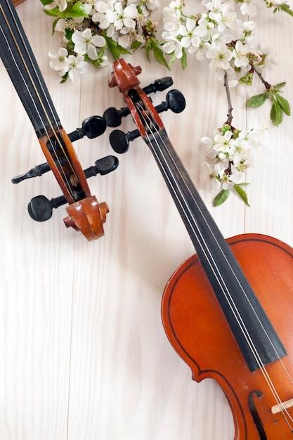 Zwei violinen und blühende kirschbaumniederlassungen auf weißem hölzernem hintergrund. Premium Fotos