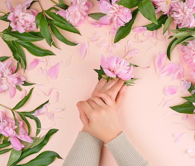 Zwei weibliche hände und rosa blühende pfingstrosen auf einem beige hintergrund, modernes konzept für handhautpflege Premium Fotos