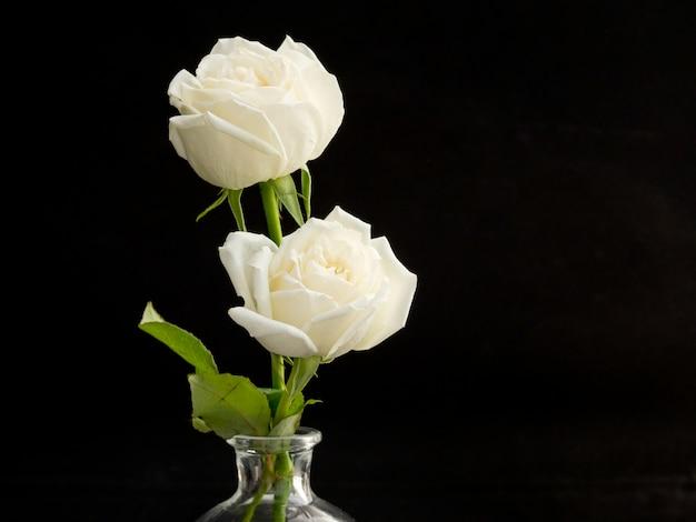 Zwei weiße rosen für liebhaber im
