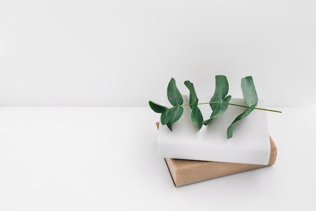 Zweig auf zwei bücher gegen weißen hintergrund Kostenlose Fotos