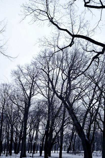 Zweige der bäume Premium Fotos