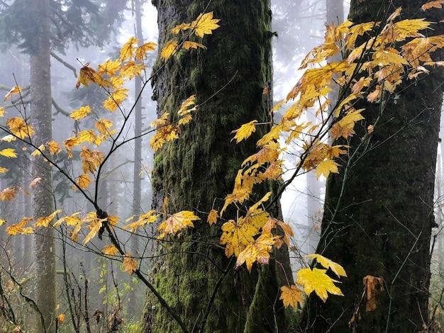 Zweige mit gelben blättern, umgeben von bäumen in oregon, usa Kostenlose Fotos