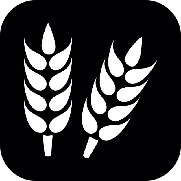 Grain plant on square background Free Icon