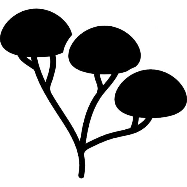 three branches