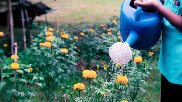 庭でマリーゴールドの花に水をまく人。16:9スタイル Premium写真