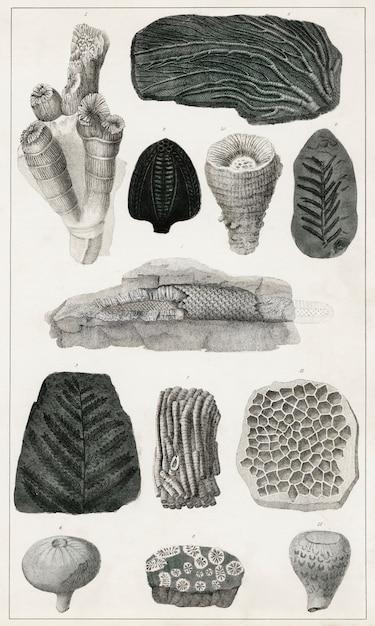 地球の歴史と生き物からの様々な化石の収集(1820年) 無料写真