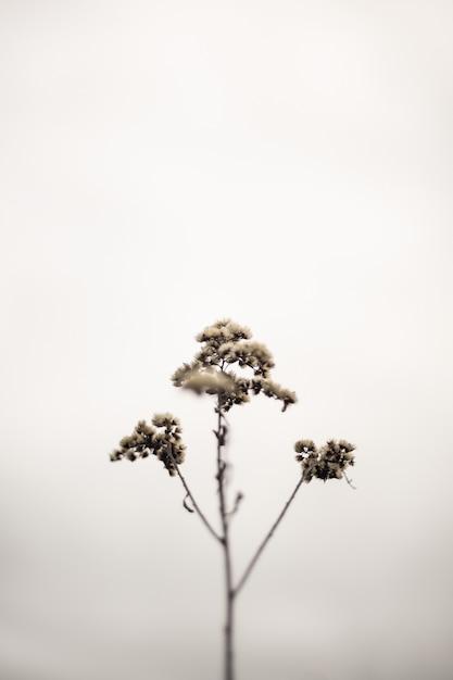1つの孤立した細い植物の枝 無料写真