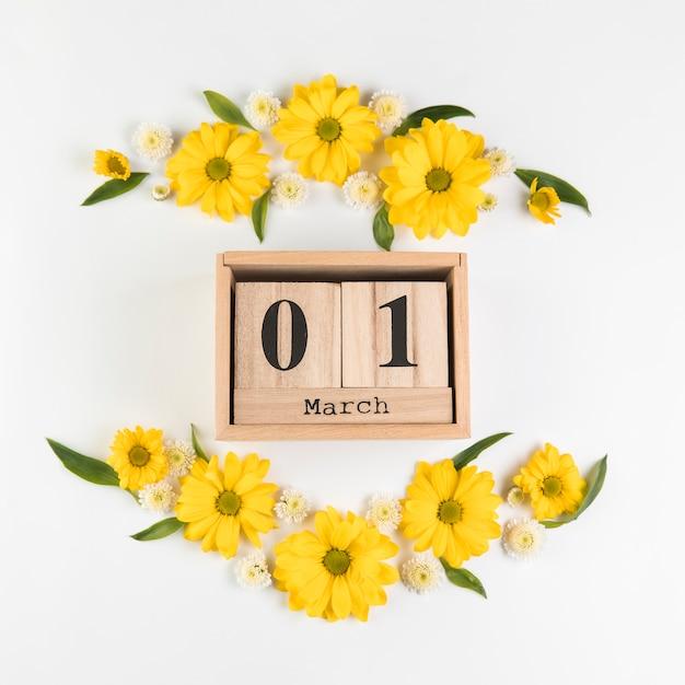 Деревянный календарь с 1-м маршем, украшенный цветами ромашки и хризантемы на белом фоне Бесплатные Фотографии