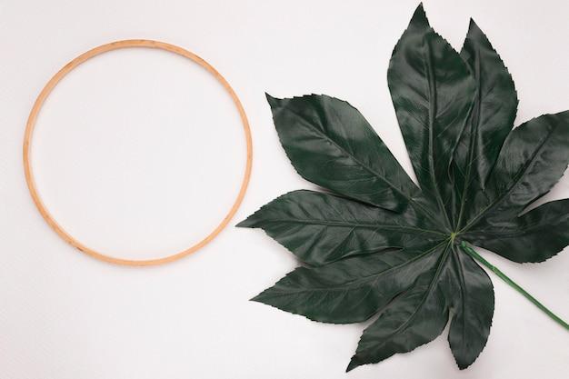 白い背景の上の1つの緑の葉と円形の木製フレーム 無料写真