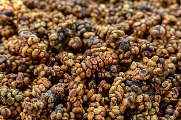 コピ・ルワックまたはチベットコーヒーは、世界で最も高価で生産量の少ない種類のコーヒーの1つです。コーヒー豆は、チベットによって排泄されます。 Premium写真