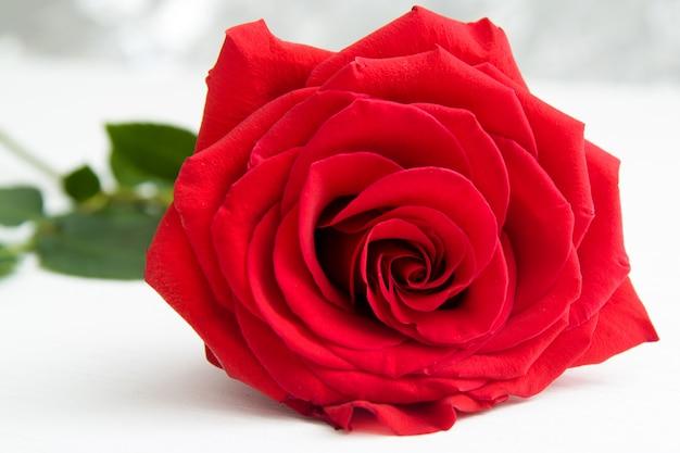 背景のボケ味を持つ1つの赤いバラ Premium写真