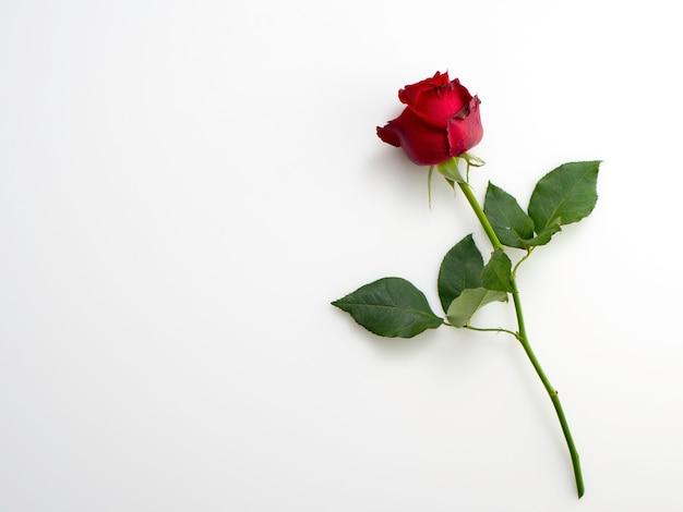 白地に1つの美しい赤いバラ Premium写真