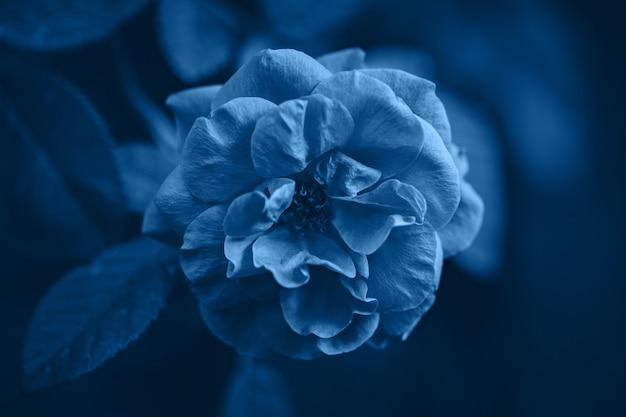 2020年の古典的な青の色。自然の背景 Premium写真