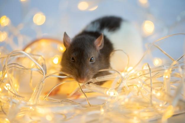 Новогодняя открытка. символ новогодней 2020 крысы на рождественские огни боке Premium Фотографии