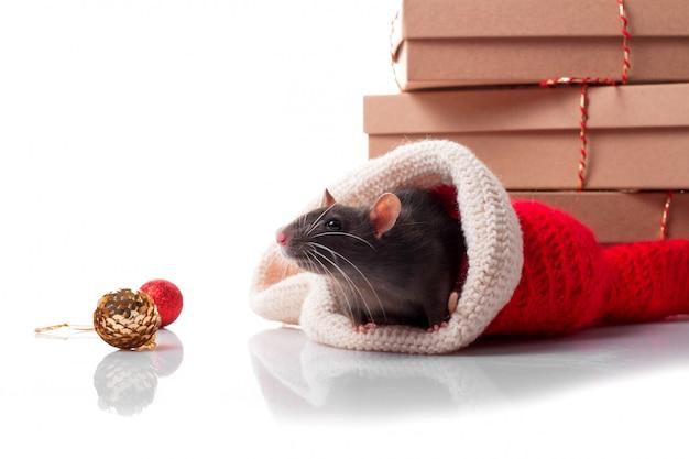 新年の装飾と暗い灰色ネズミとラット2020の中国の幸せな年 Premium写真