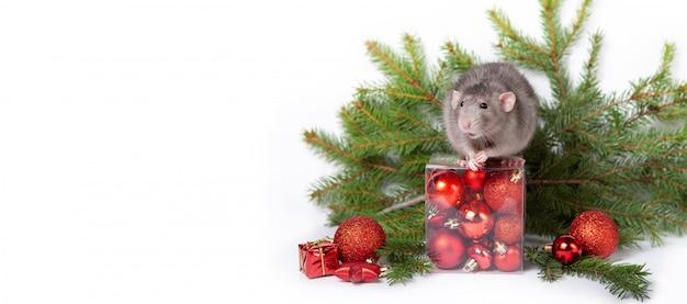 Очаровательная крыса дамбо с елочными украшениями. 2020 год крысы. веточки ели, красные елочные шары. китайский новый год. Premium Фотографии