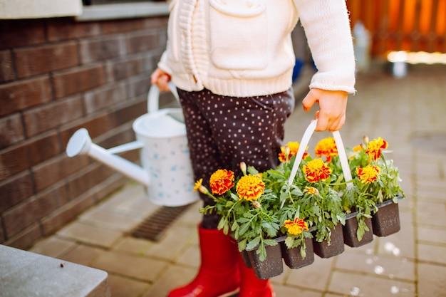 彼女の裏庭に滞在しているマリーゴールドの2つのパックを持つ少女 Premium写真
