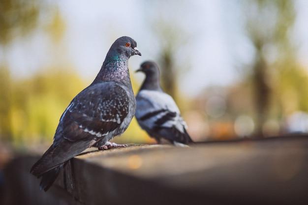 公園の石造りの塀の上に座っている2つの鳩 無料写真
