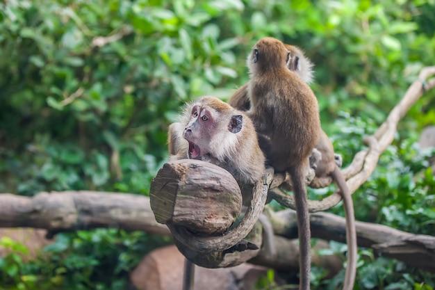 2匹の猿と驚いた猿 Premium写真