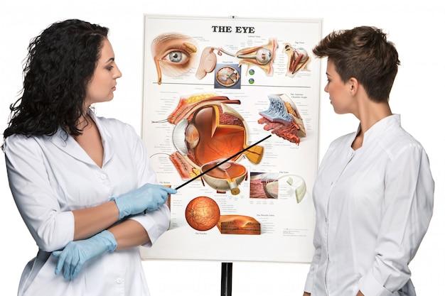目の構造について話す2人の眼鏡または眼科の女性 無料写真