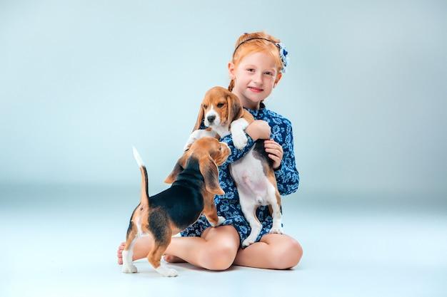 幸せな少女と灰色の壁に2つのビーグル犬の子犬 無料写真