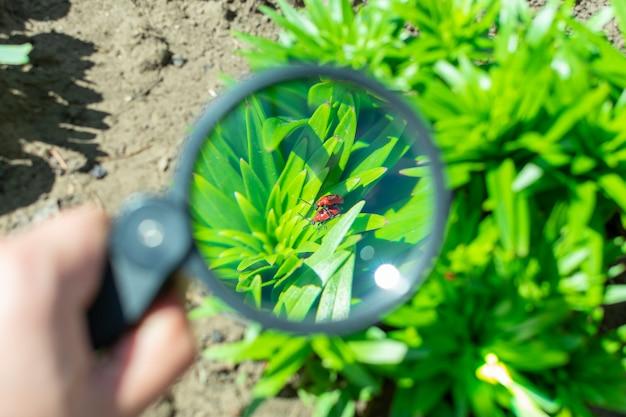 庭の植物の上に座っている2つの交尾バグを虫眼鏡で見る Premium写真